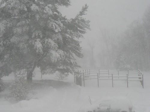 garden in blizzard