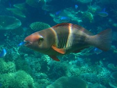 reef fish2