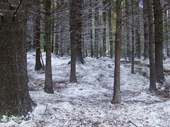 Snow Covered Forest 02