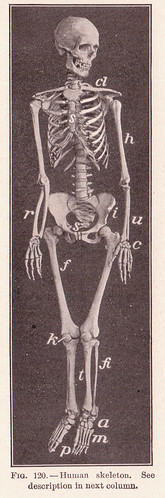pg 192 Human Skeleton