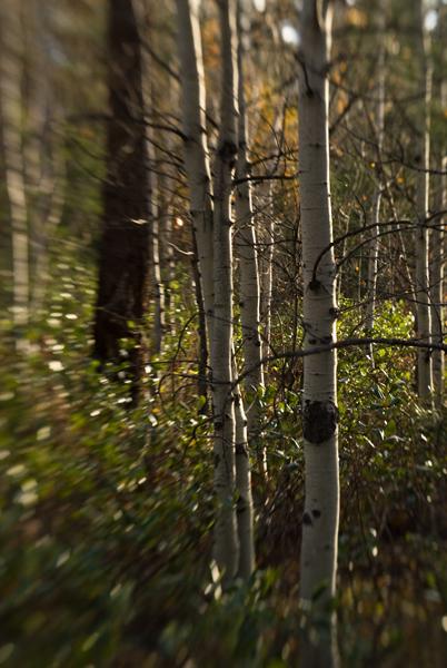 An autumn drive up the Chewuck