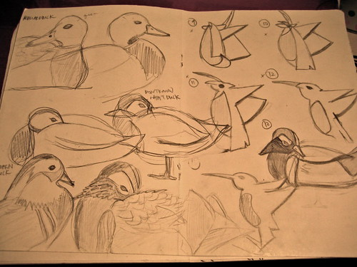 Some sketches I did for my research on ducks