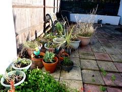 Some garden