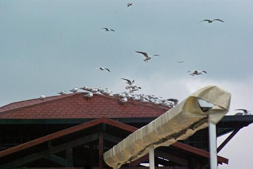 seagulls, beykoz, istanbul, pentax k10d