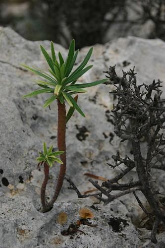 Modest plant