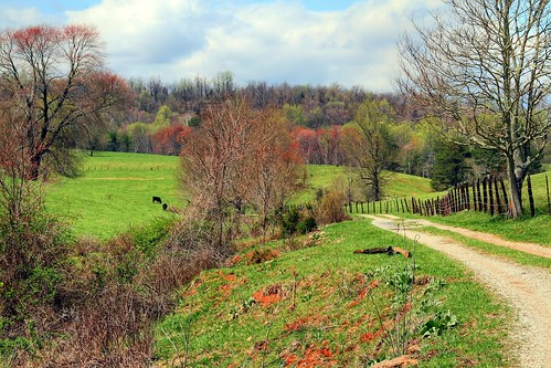 Two Steers Road