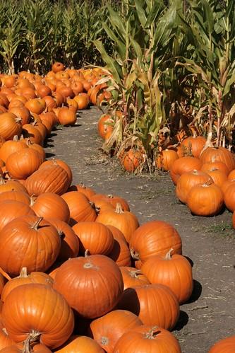 Follow the orange gourd road...