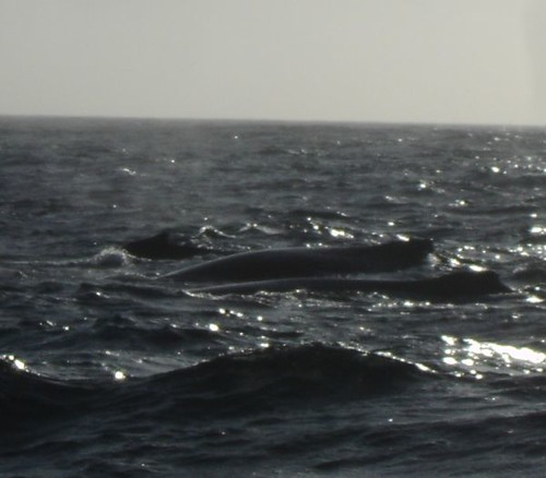 And More Whales!