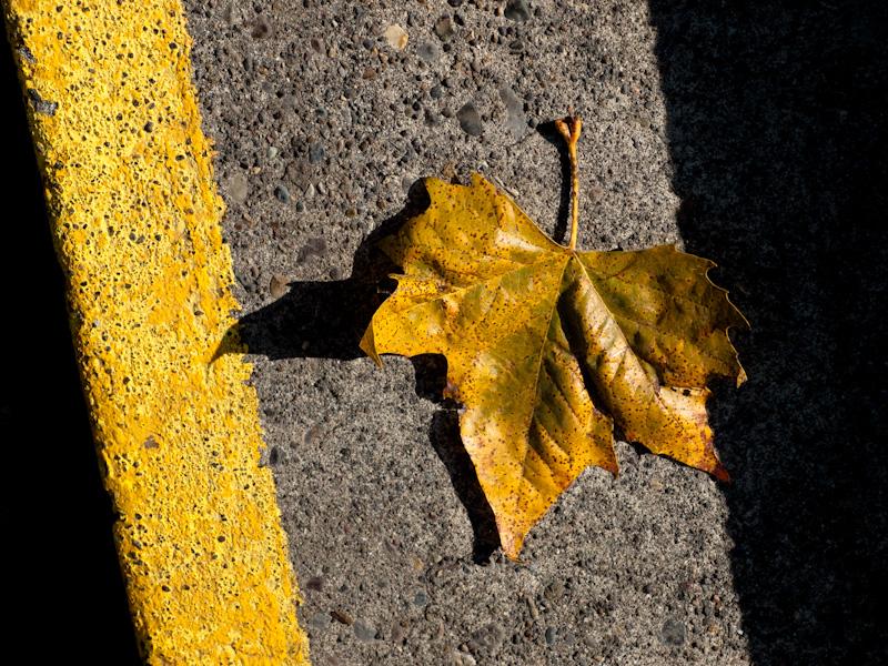 Saturday Leaves