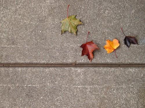 Oct29-Leaves3