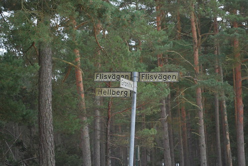 A four-street junction in the middle of the forest