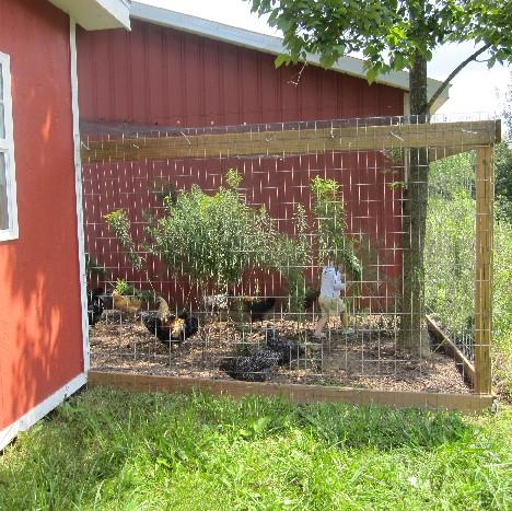 Visit Chickens
