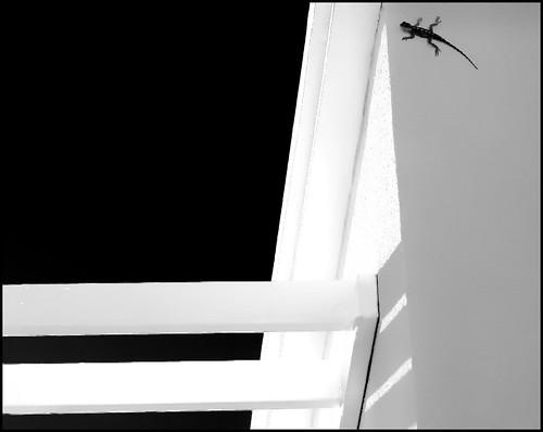 Lizard by Dooby3