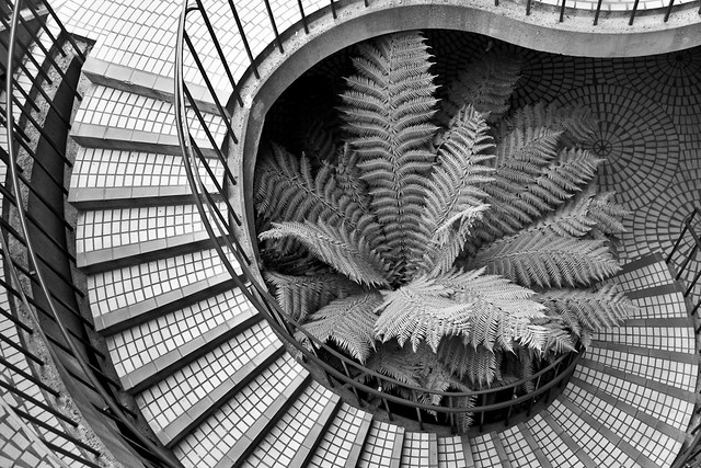 Spiral Stairs and Fern