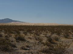 Mojave National Preserve (53)