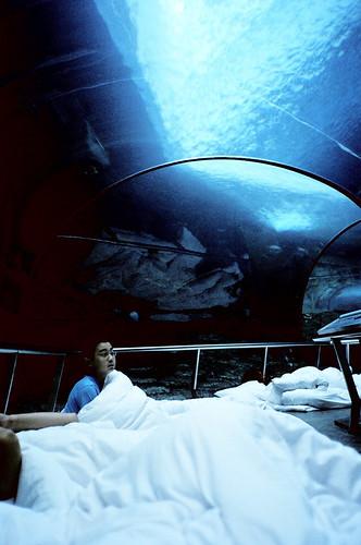 [海洋之夜]人看魚 魚也看人