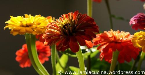 Geburtstagsblumen 0_2009 08 07_1825