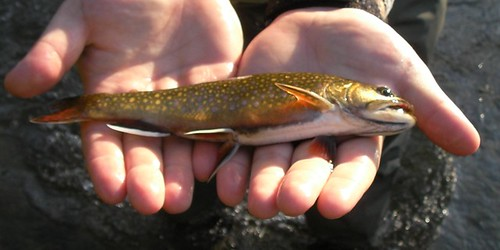 Better Fish Closeup