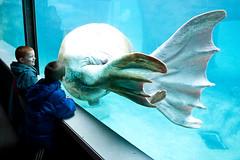 Walrus Flippers