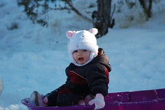 Selah Checking out the Purple Sled