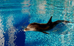 Bella, the baby dolphin at The Secret Garden of Siegfried & Roy