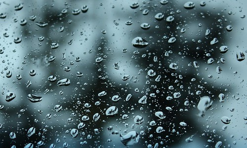 Trees Reflected in Rain Drops por Lisa568