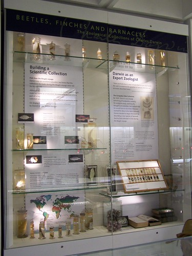 Darwin exhibit, University Museum of Zoology, Cambridge