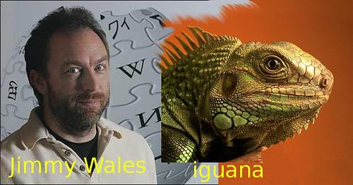Jimmy Wales, Iguana