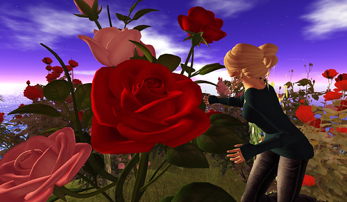 Huge roses