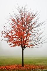 Autumn Surrender