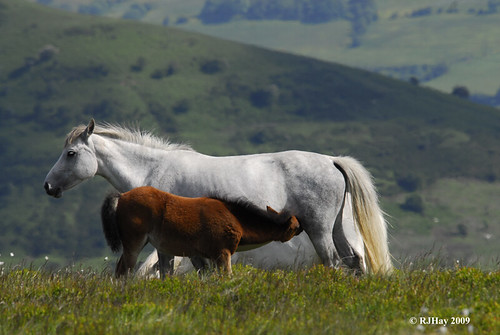 Horses Along the Ridge