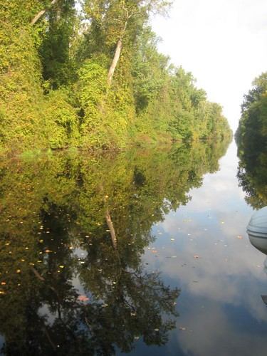 Dismal Swamp reflections