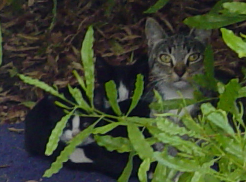 Kitty family in our backyard