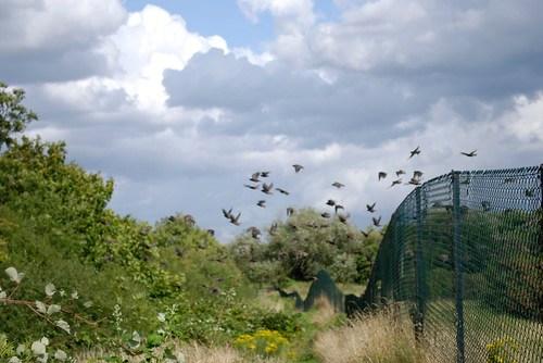 Ducker Footpath, Northwick Park
