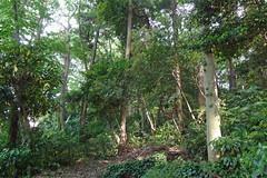 久田緑地―北地区の森(Kuden Ryokuchi, Kanagawa, Japan)