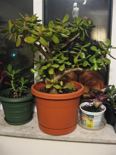 plants (1)