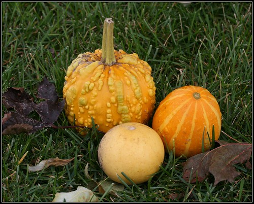 Gourds by you.