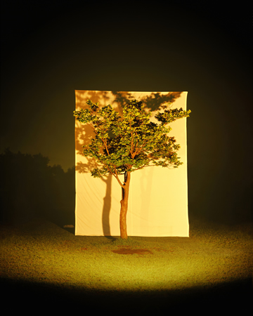 Tree #4, from the series Photography-Act, 2007