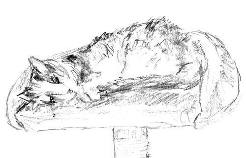 Cats, part 18