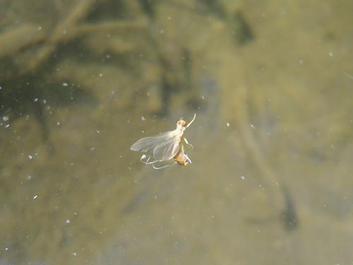 Sulphur On Water