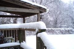 backyard 03-02-09