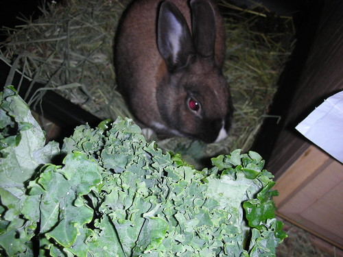 Queen and her kale