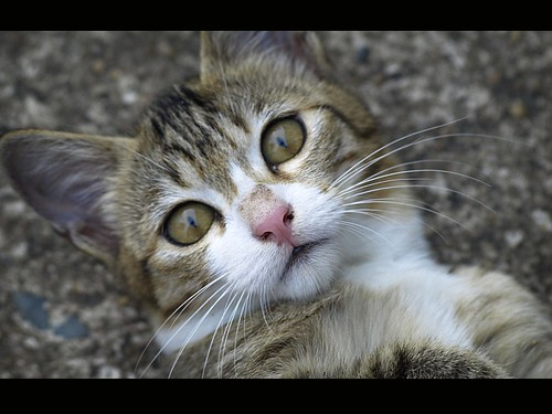 kucing ibu saya