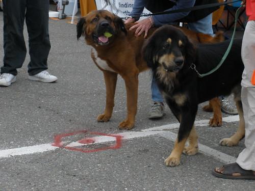 Jube and I-Ching, representing the Asian mastiffs!