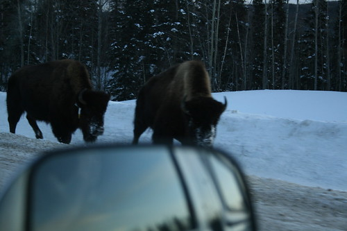 my truck really didnt want to fight a bison.