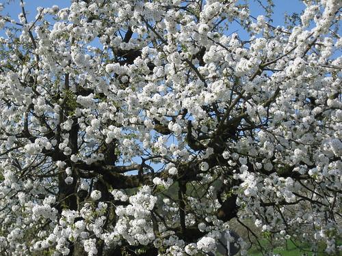 Lovely blossom.