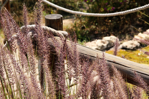 Plants-and-fence