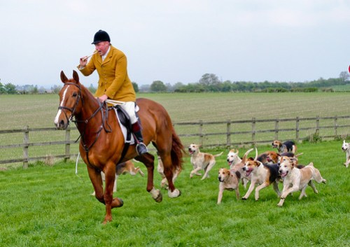 Hounds of the Vale of Aylesbury