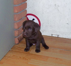 Kluivert, onze pup