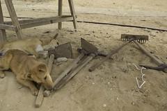 AERA Dogs #2
